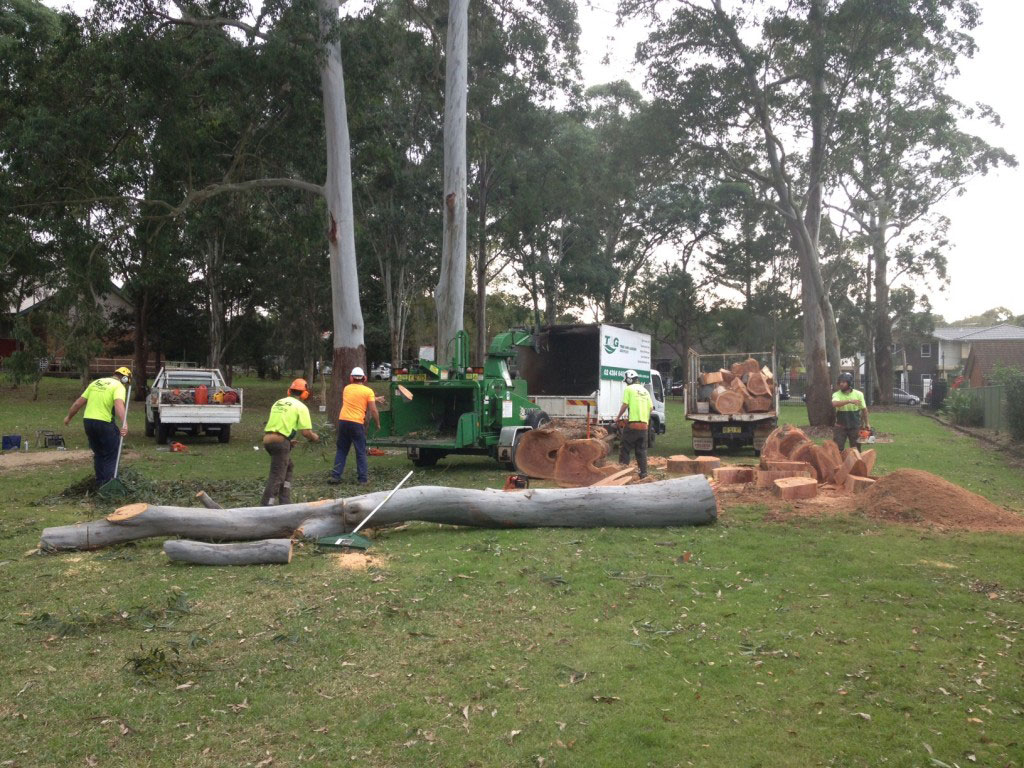 Team effort on a large tree removal