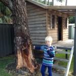 tree safety audits