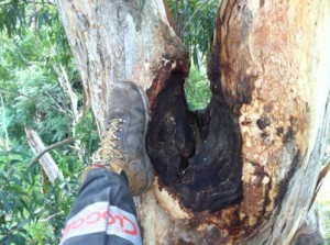Aerial tree inspections pick up defects that can't be seen from the ground