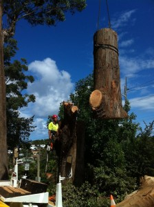 Tree removal with Crane