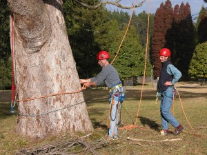 Tree Climber Training