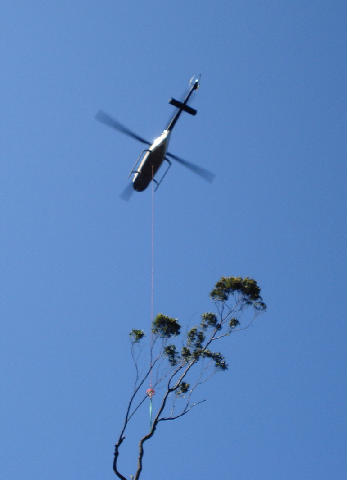 Helicopter Flying Tree Section to Landing Zone
