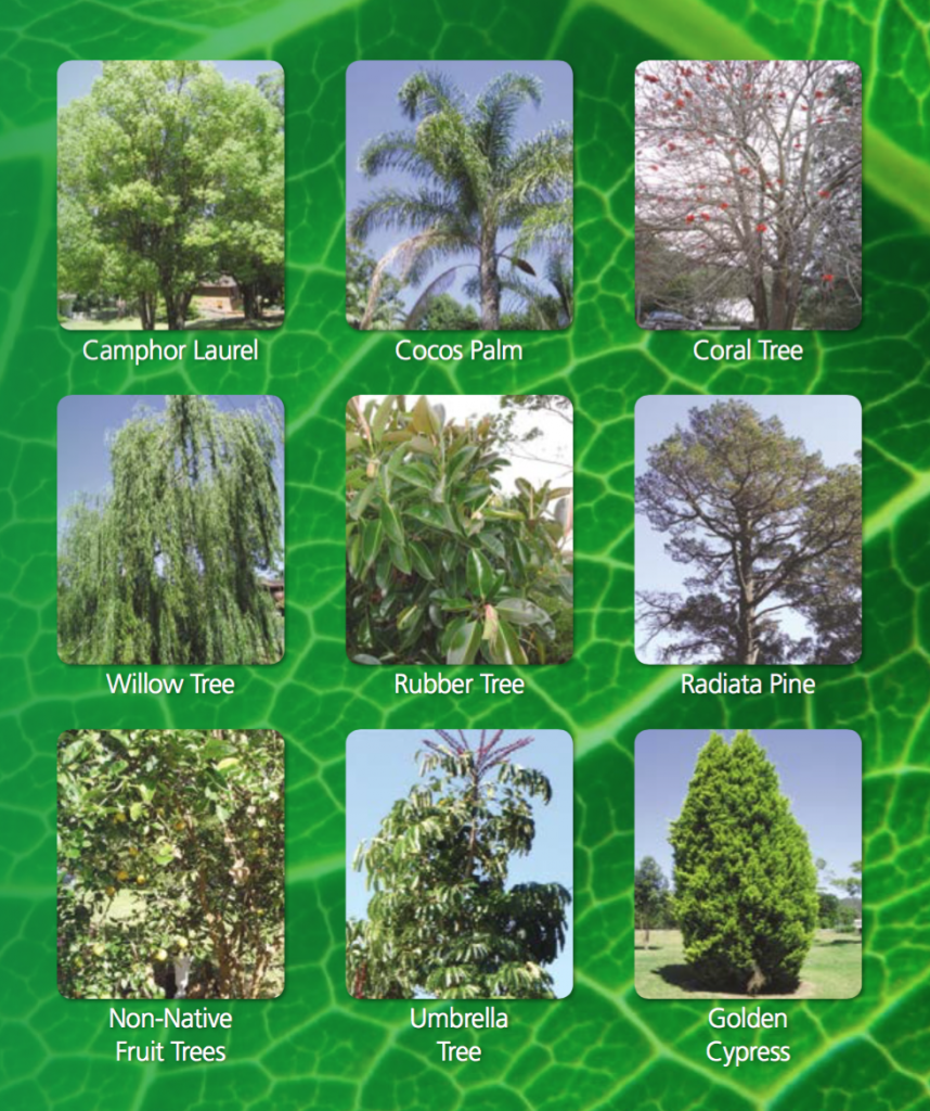 gosford_council_exempt_tree_species